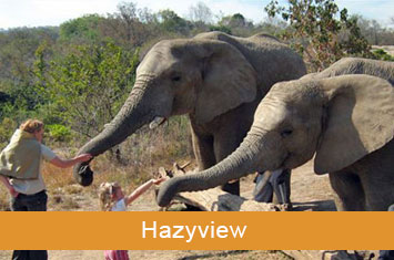 Hazyview Elephant Sanctuary SA